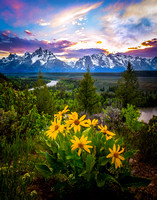 Wildflowers at the Grand Tetons and Snake River