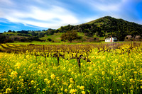 Wine Country Spring Bloom