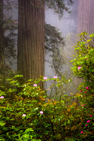 Blooming Redwood Grove