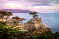 Lone Cypress Spring Sunset