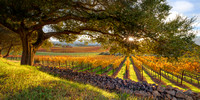 A Sunset in California Wine Country